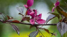 В Лопатинском саду Смоленска высадили уникальные деревья