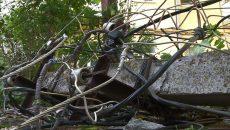 В Смоленске рухнувшее дерево обесточило дом