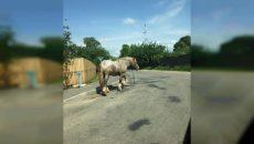 Под Смоленском ищут хозяев потерявшегося коня — соцсети