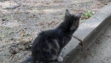 После смерти смолянки сын выкинул ее кошку с 9 этажа — соцсети