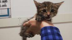 В Смоленске в туалет торгового центра подбросили котят