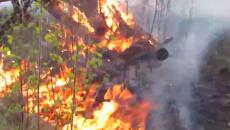 Под Смоленском сильный лесной пожар сняли на видео