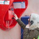 https://smolensk-i.ru/society/rostelekom-otmenil-platu-za-mezhdugorodnie-telefonnyie-zvonki-s-taksofonov_287745