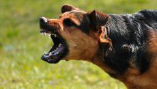 В полиции прокомментировали инцидент с нападением собаки на ребенка в Смоленске