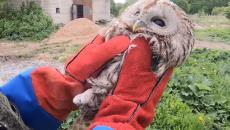 Под Смоленском «переезд» совы в новый вольер приюта сняли на видео