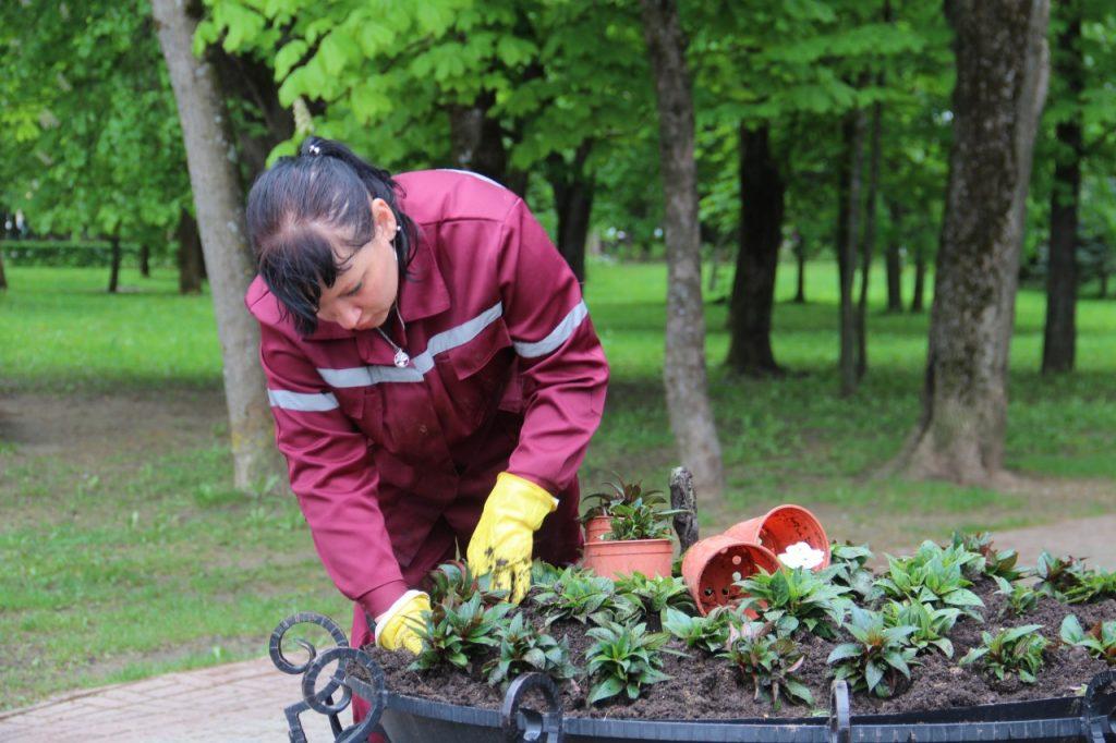 высадка цветов в центре Смоленска_2
