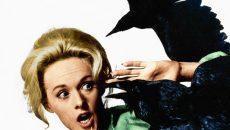 Под Смоленском агрессивная ворона напала на женщину