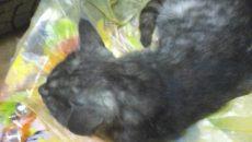 Под Смоленском очередной жертвой живодёра-стрелка стал кот