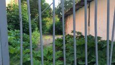 Жители пожаловались на заросли борщевика в центре Смоленска