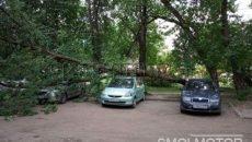 В Смоленске после урагана дерево упало на автомобили