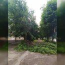 https://smolensk-i.ru/society/v-smolenske-na-dorogu-ruhnulo-derevo-sotsseti_289948
