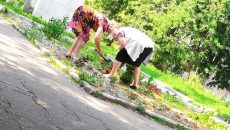 Под Смоленском воровки цветов разорили клумбу возле памятника