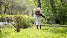 Парки Смоленска обработают от клещей
