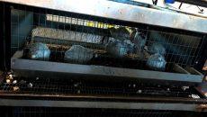Суд приостановил работу смоленского птицехозяйства