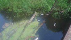 Бывшего техника очистных сооружений будут судить за мор рыбы в смоленской реке
