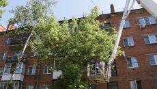 В центре Смоленска спилили деревья
