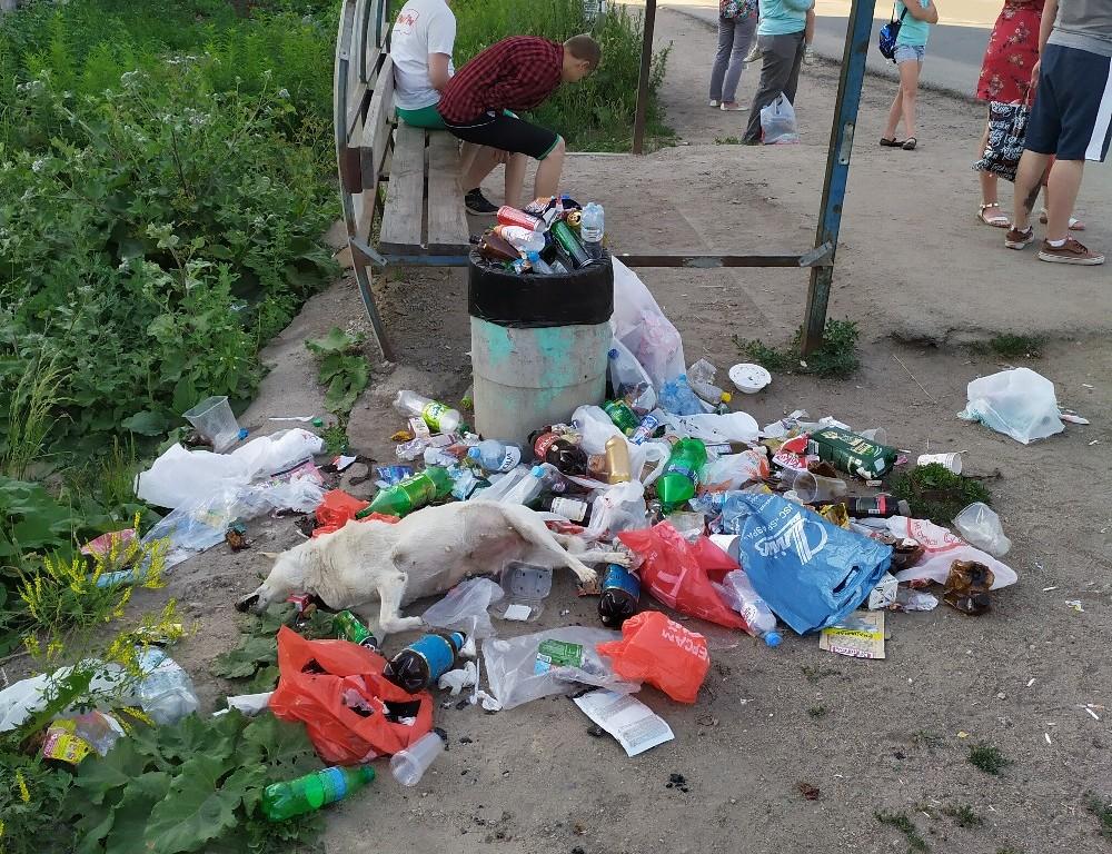 В Смоленске у остановки возникла стихийная свалка с мёртвой собакой