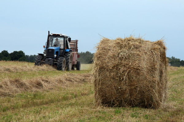 трактор сено (фото АСО)