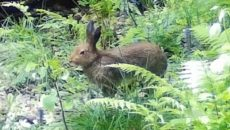 В «Смоленском Поозерье» осторожный заяц попал в видеоловушку