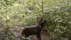 В «Смоленском Поозерье» дневные и ночные прогулки животных сняли на видео
