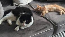 Стало известно, как Алексей Островский назвал своего рыжего котёнка
