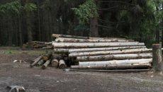 Под Смоленском выявили незаконную рубку леса