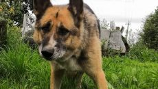 Под Смоленском дружелюбную собаку выбросили на помойку