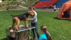 В Смоленске выставка собак превратила стадион в палаточный городок