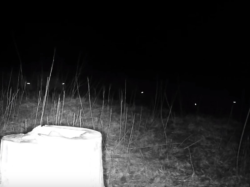 Смоленское Поозерье, кабаны, солонец (кадр видео youtube.com channel UCLsBCJJAAqXA_8x3knG2T2A)
