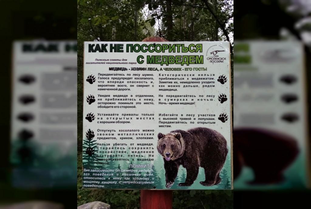 Посетителей «Смоленского Поозерья» предупредили о частых встречах с медведями