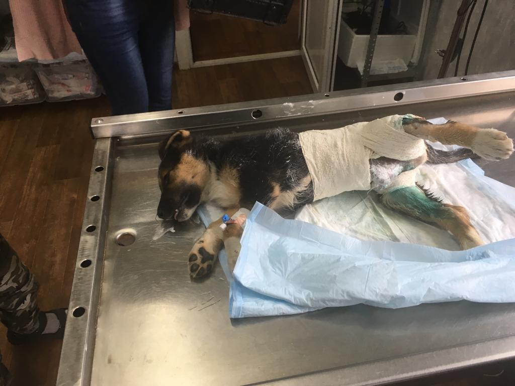 избитый щенок, живодёрство, Гагарин (фото vk.com overheardgagarin)