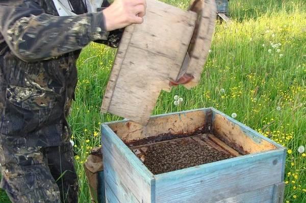 Под Смоленском вор не сумел справиться с украденными пчелами