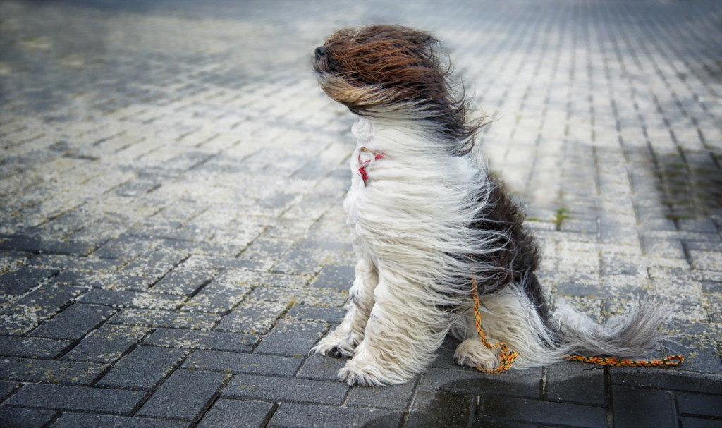sobaka-ulica-veter