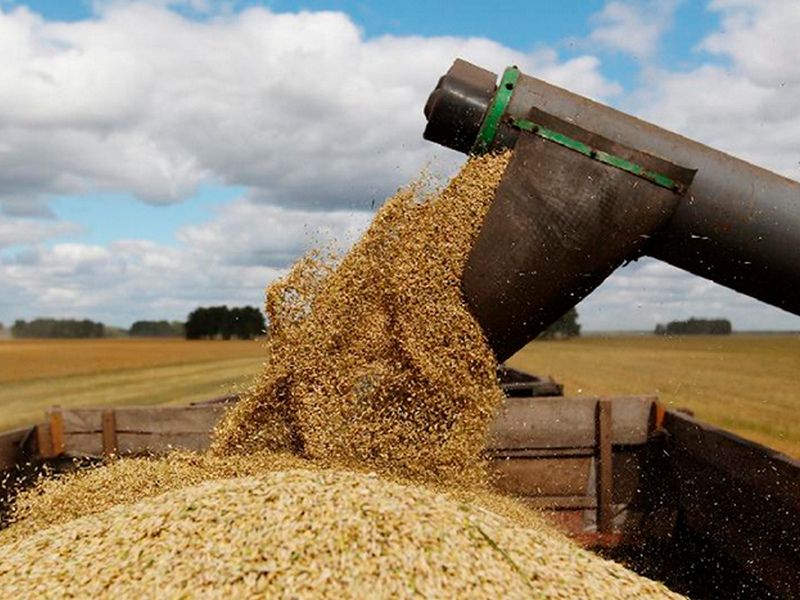 зерно, уборочная, страда, жатва, комбайн (фото admin-smolensk.ru)