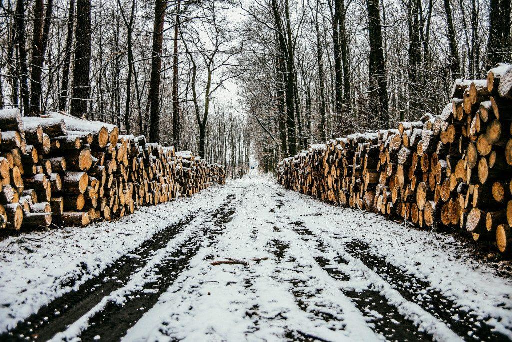 древесина, деревья, спил, вырубка, зима, дорога