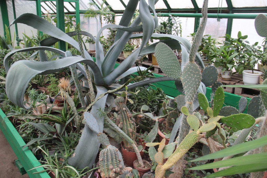 stancziya-yunyh-naturalistov-rdsh-parnik-teplicza-agava