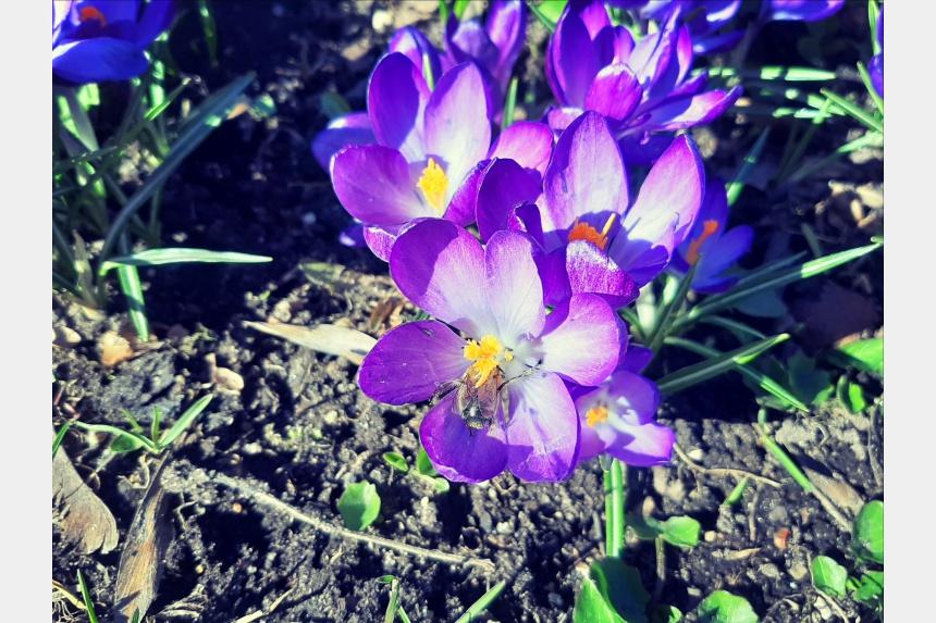 цветы Блонье