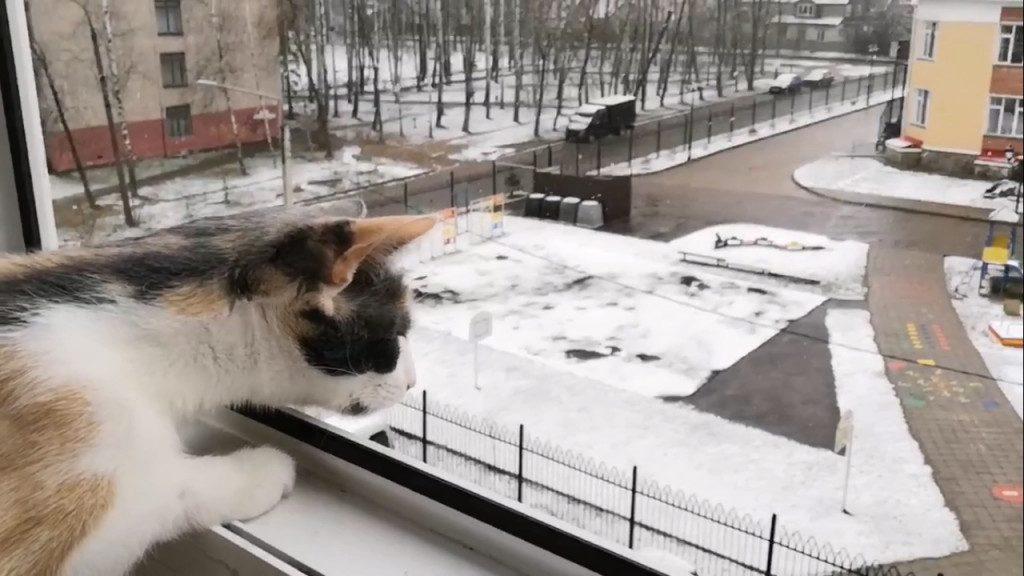 кот снег весна снегопад