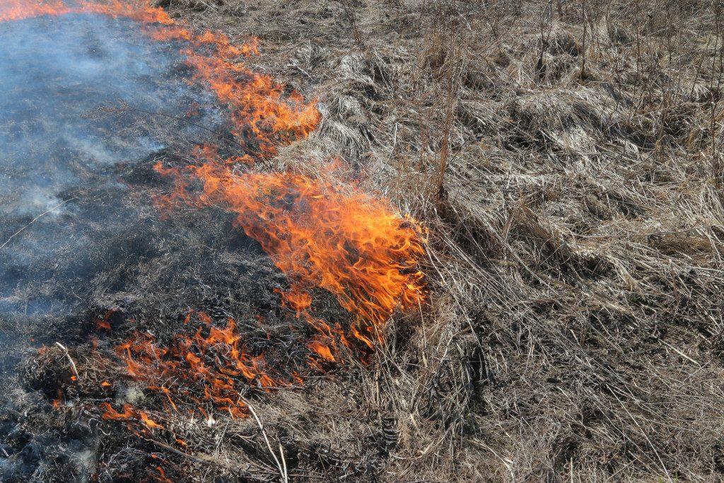 пал сухой травы, растительность, возгорание (фото пресс-службы ГУ МЧС РФ по Смоленской области)