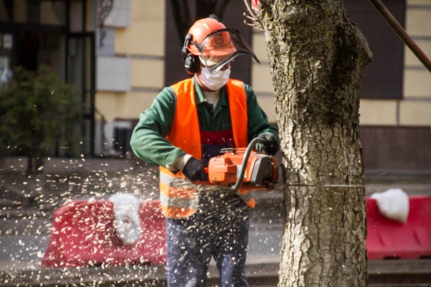 вырубка деревьев, спил, реконструкция части улицы Николаева (фото smoladmin.ru)
