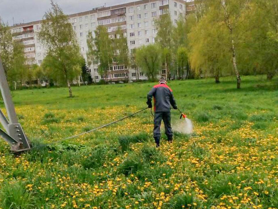 обработка гербицидами от борщевика, проспект Строителей (фото vk.com official_smolensk)