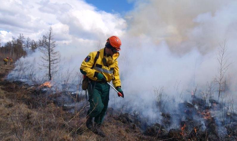 тушение лесного пожара (фото пресс-служба ФБУ «Авиалесоохрана»)