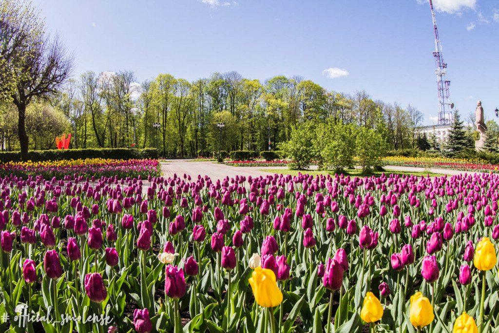 тюльпаны на площади Победы (фото vk.com official_smolensk)