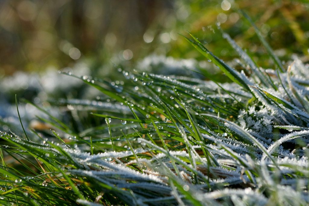 заморозки трава лето