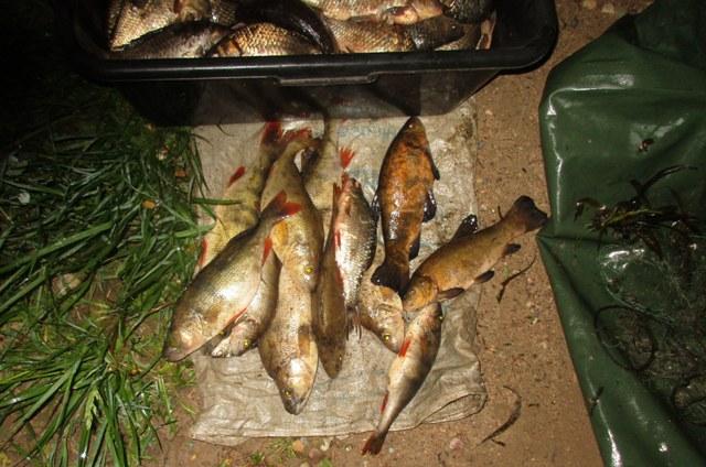 браконьер рыба