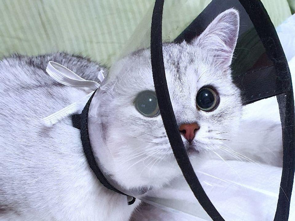 котёнок Эдвард, коронавирус (фото vk.com kseniya_nail_stydio_smolensk)