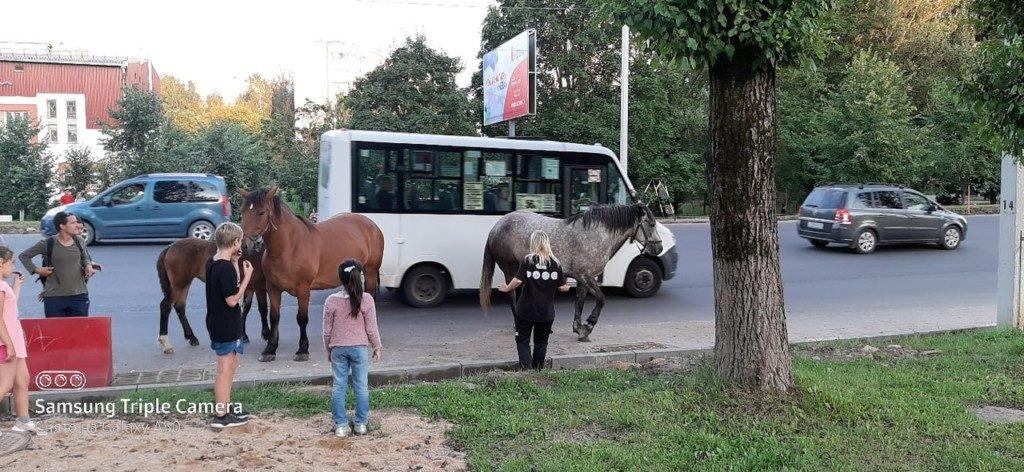 табун лошадей Смоленск