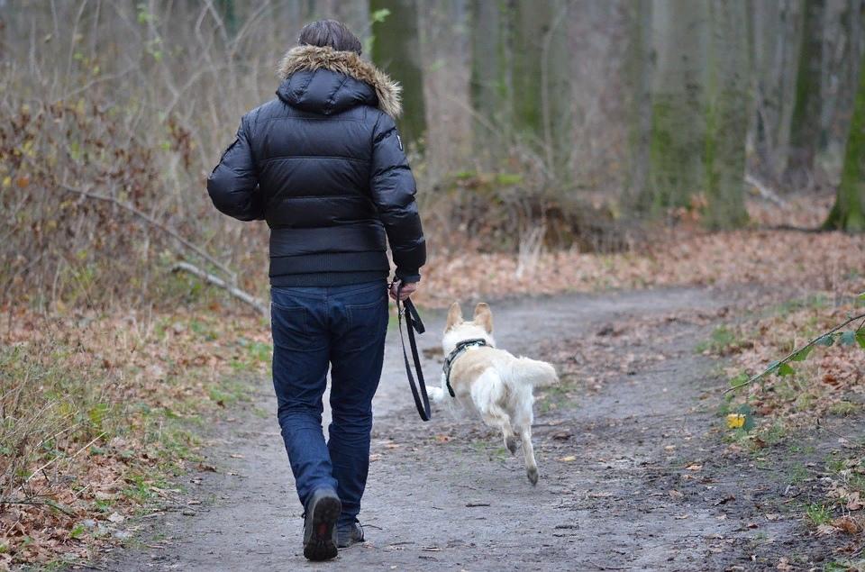 побег бежит мужчина собака