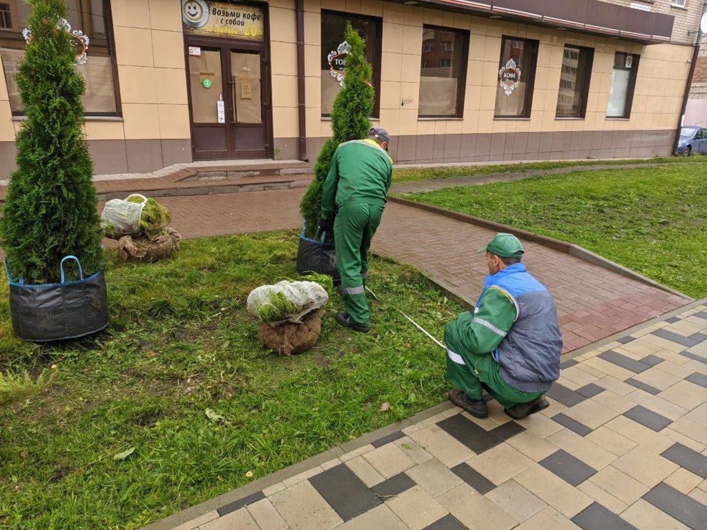 высадка декоративных деревьев 10.09.2020 на Николаева_2