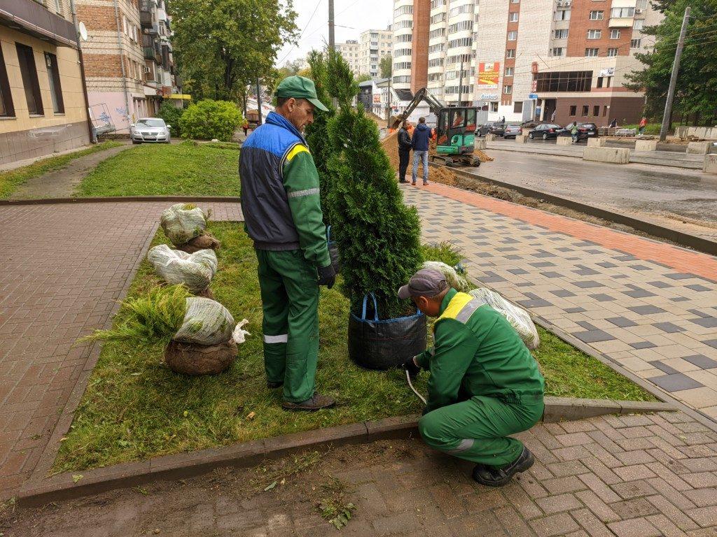 высадка декоративных деревьев 10.09.2020 на Николаева_3